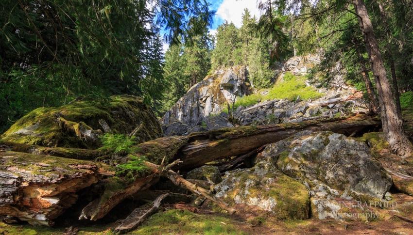 Garibaldi Provincial Park umgestürzter Baum in Kanada