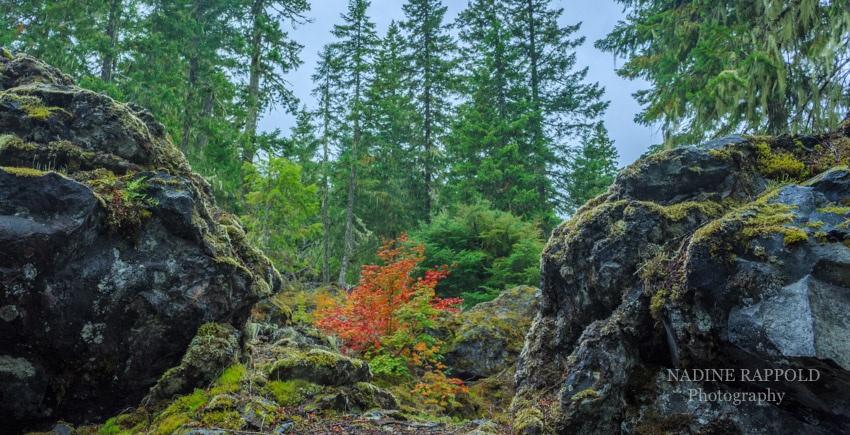 Vulkangestein und Herbstlaub in Oregon, USA