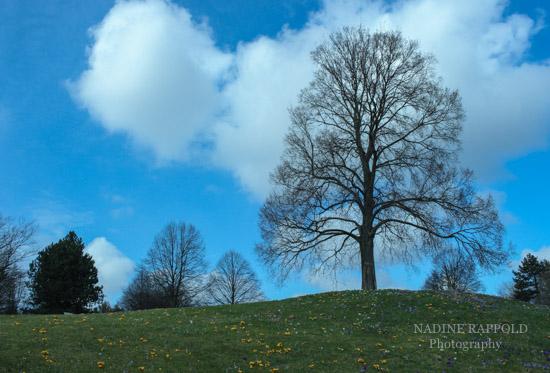 Baum auf Hügel im Britzer Garten, Berlin