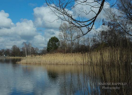 Britzer Garten in Berlin, See mit Ast im Vordergrund