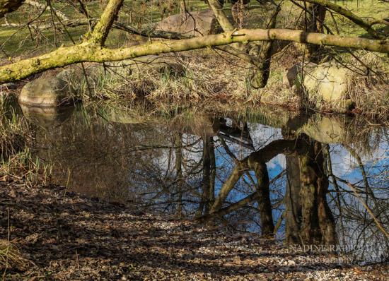 Britzer Garten Berlin, Reflexion Baum im Wasser