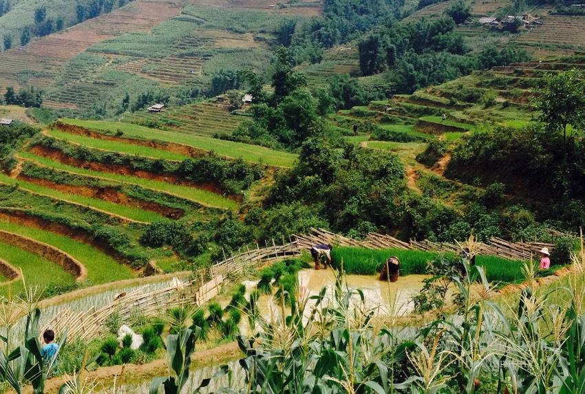 Sapa Vietnam Menschen bei Reisernte