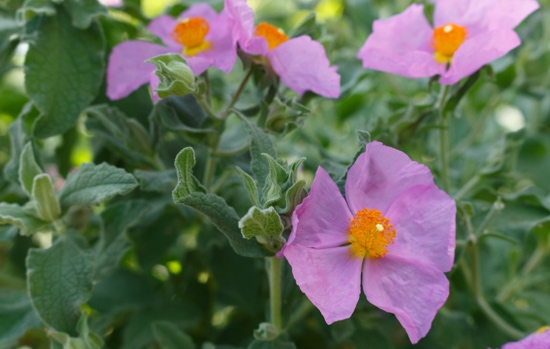 Blumen Natur regelmäßig entspannen