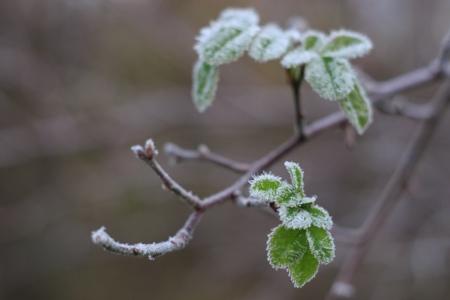 Meditation Vorurteil Zweig Frost