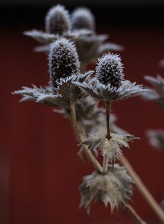 Meditation Vorurteil Distel Frost