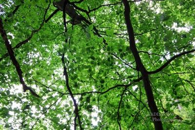 Fotomotive Blätter Licht