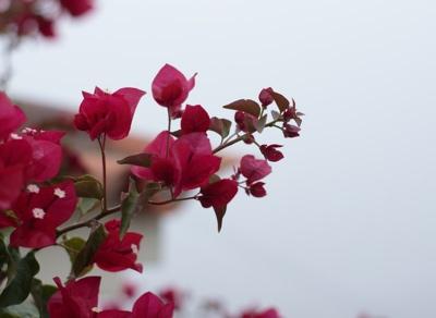 Fotomotive Blume Nebel