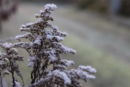 Meditation Vorurteil Strauch Frost