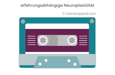 Resilienz innere Widerstandsfähigkeit erfahrungsabhängige Neuroplastizität