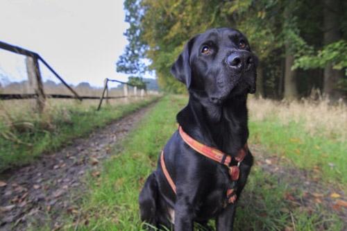 geringe Schärfentiefe Hund unscharfer Vordergrund unscharfer Hintergrund