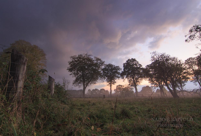 Kurz vor dem Sturm Bäume Wolken dramatischer Himmel