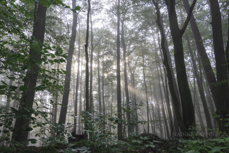 Wald Nebel mystische Stimmung Lichtstrahl